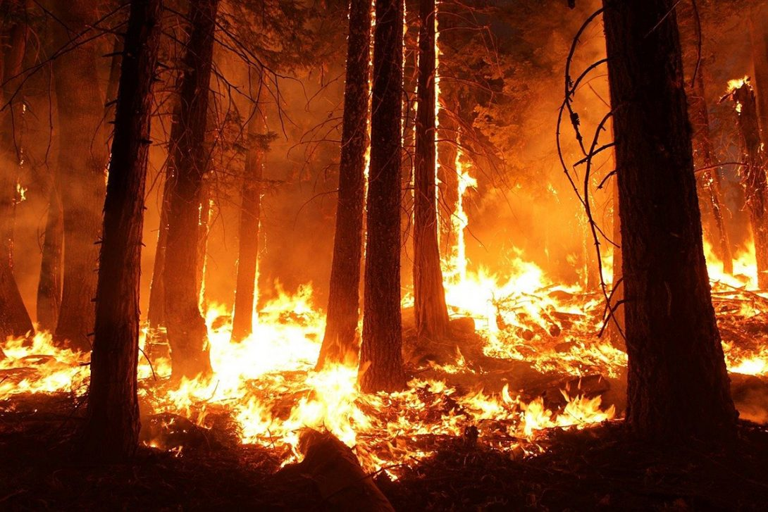 Professor Alexander Yarin uses plants to research fighting forest fires
